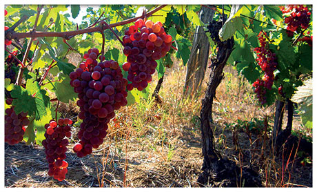Bagrina – Danube Valley wine secrets