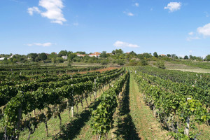 Wine Reviews – Bosnia