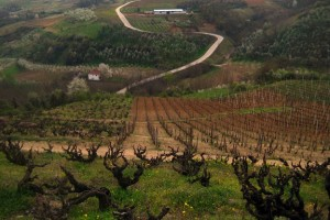 Wine Reviews – Serbia
