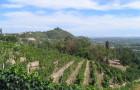 Ruché di Castagnole Monferrato DOCG