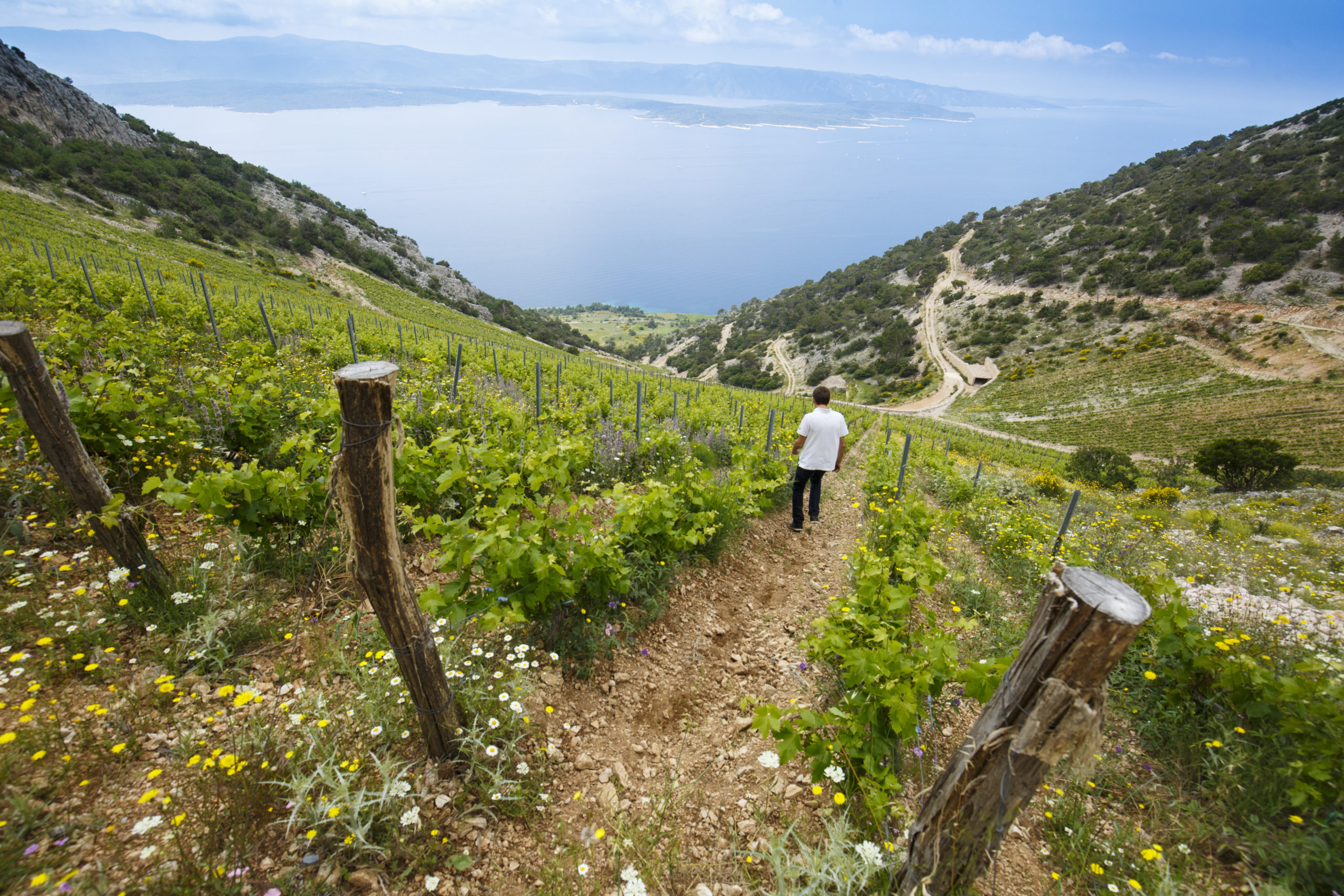 Stina Winery – Brač's second most famous export
